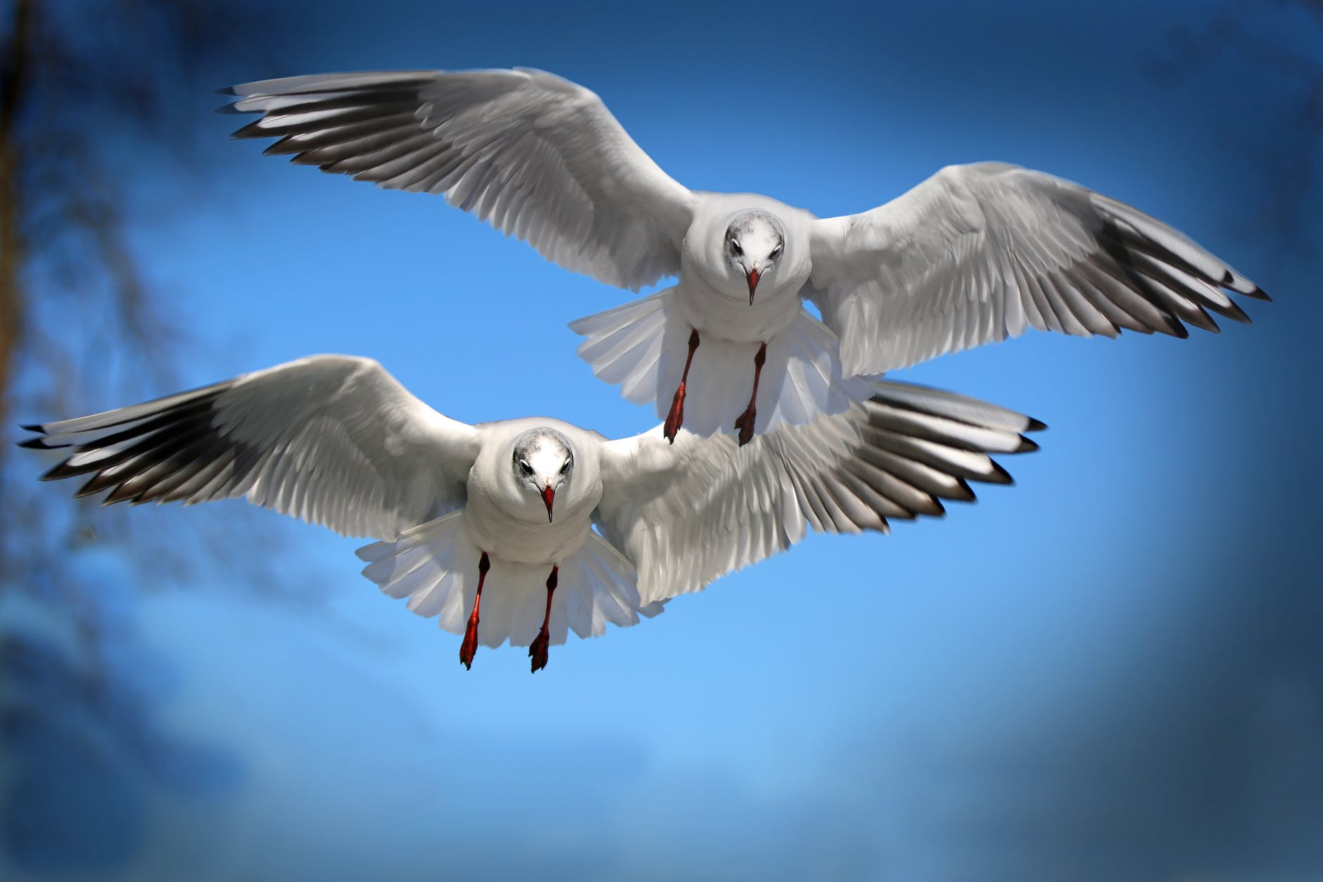 two white and black bird flying during daytime